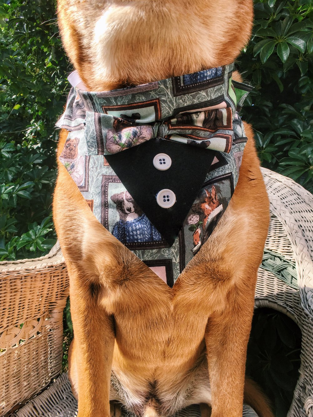 fancy_dog_bandana