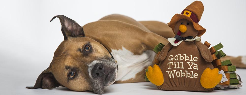thanksgiving_dog_tampa