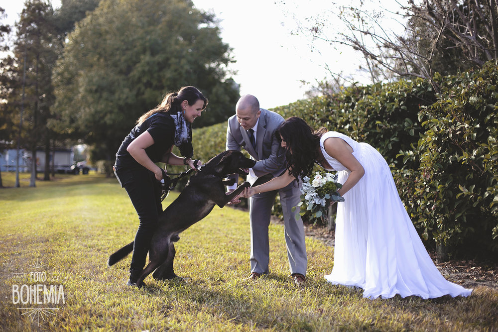 include_dog_in_wedding