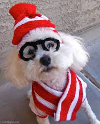 Where's Waldo? : Pet Edition - 5 Tips to Prevent Your Pet From Getting Lost