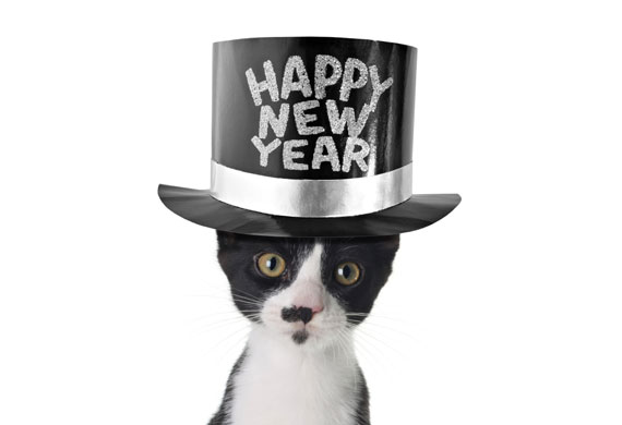 new-years-cat-iStock_000011246043Small.jpg