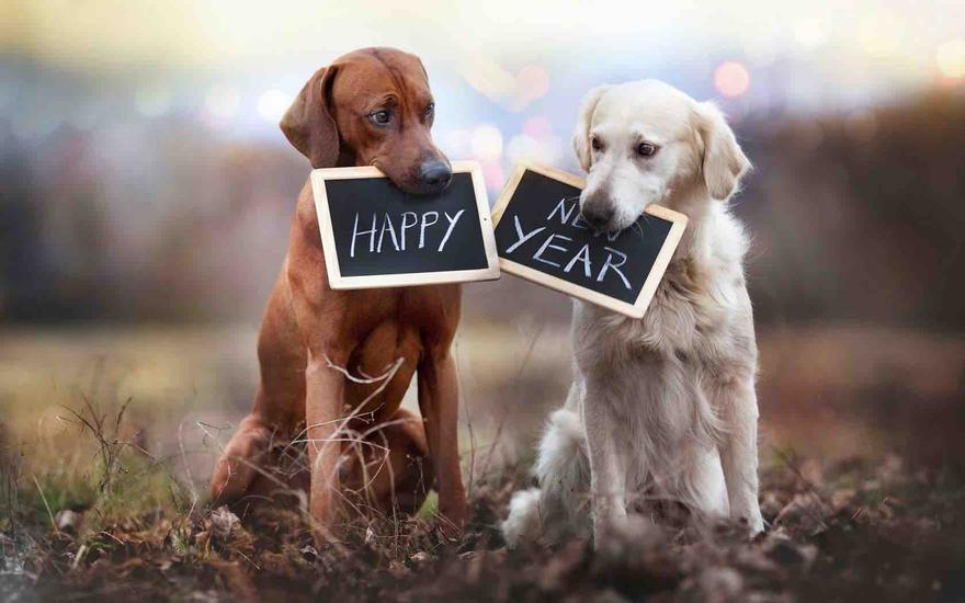 happy-new-year-cute-dogs-1680x1050-wide-wallpapers.net_880x.jpg