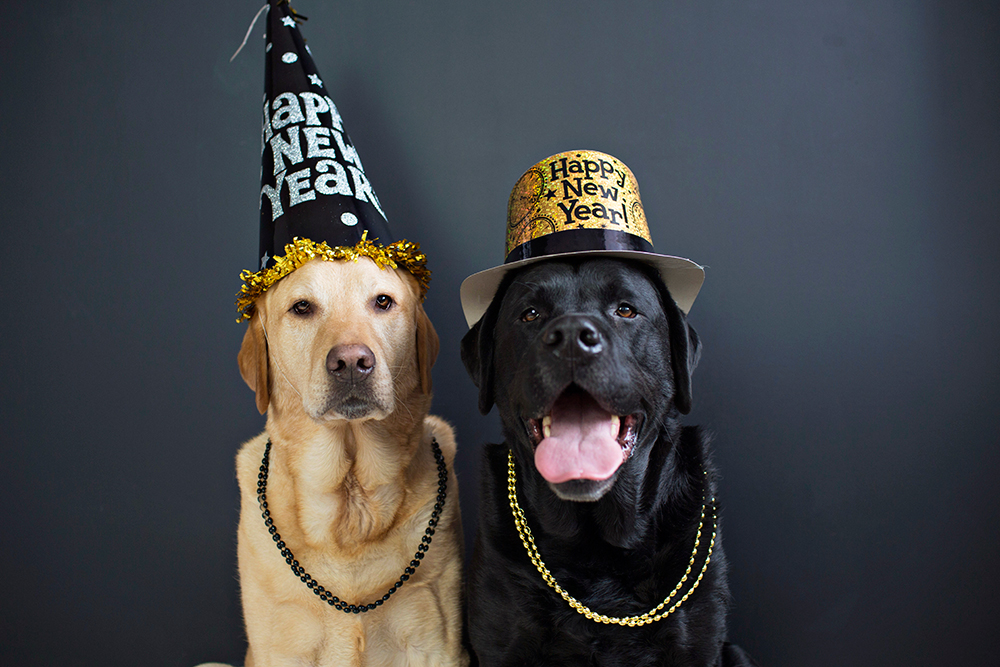 happy-new-year-dogs-celebrate.jpg