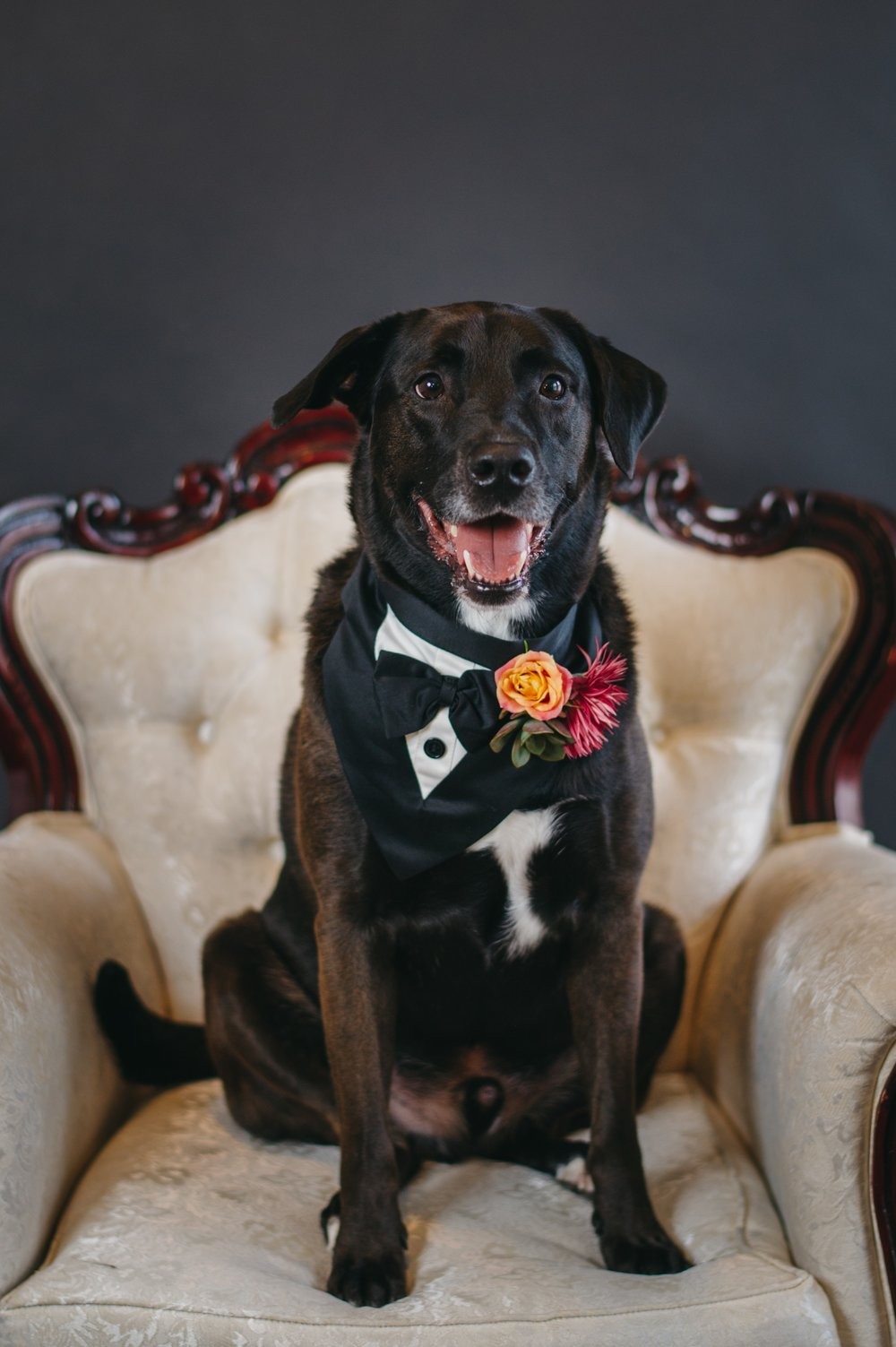 dog_wedding_attire