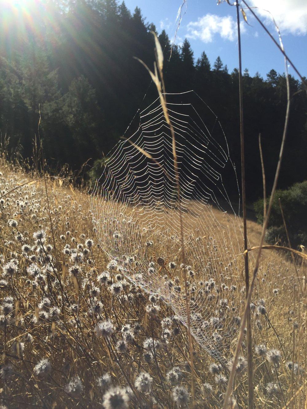 WND spider web.JPG