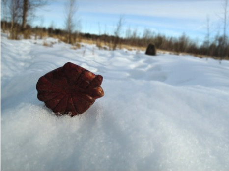 Alberta Public History Culture Elk Island
