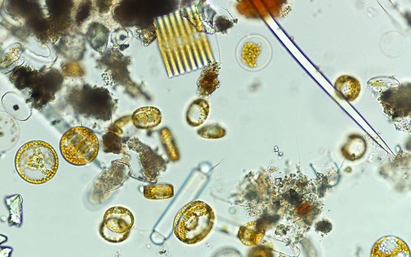 Mixed diatoms