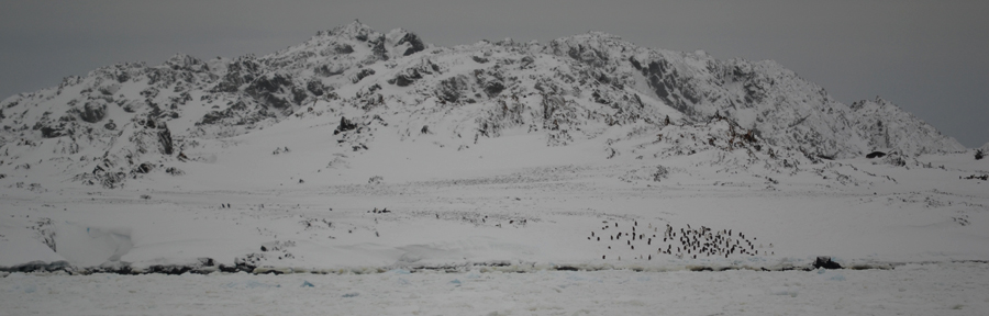 Penguins arriving to Torgeson Island, viewed from Palmer Station on Anvers Island, Antarctica.