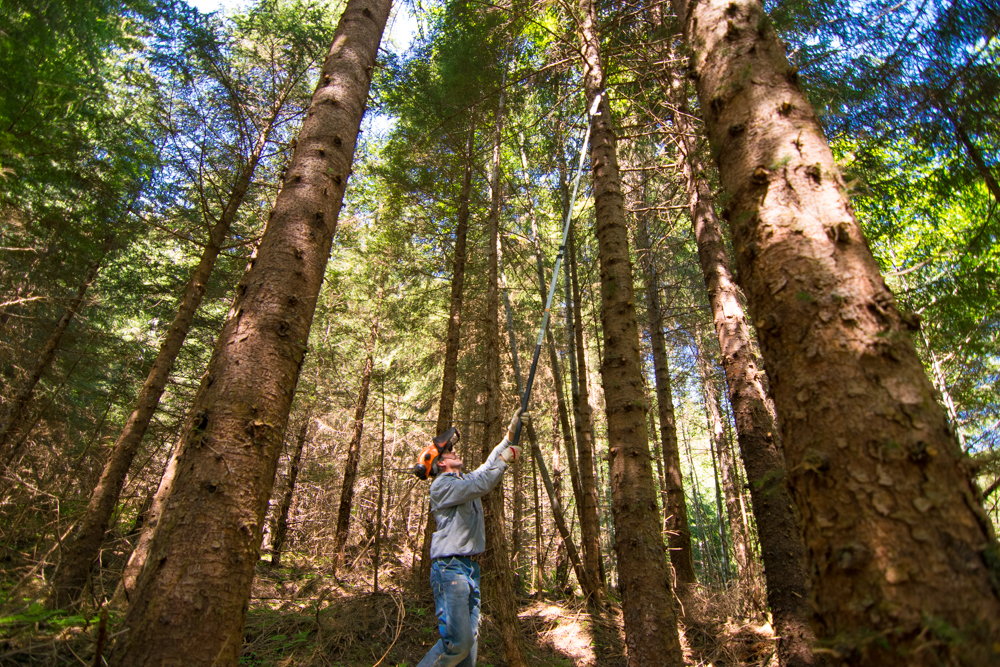 Bob Leuband is the crew leader. Here, he demonstrates tree pruning techniques used to improve under-story forage for wildlife and encourage higher quality timber production.