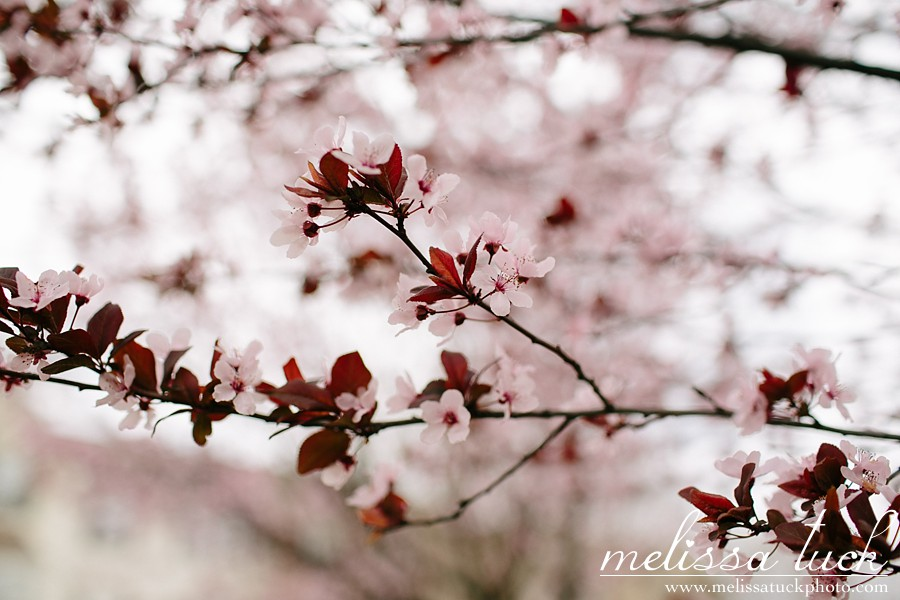 Washington-DC-cherry-blossoms-2014_0010