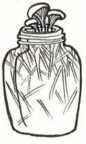 Myco-doodles for workshop diagrams.