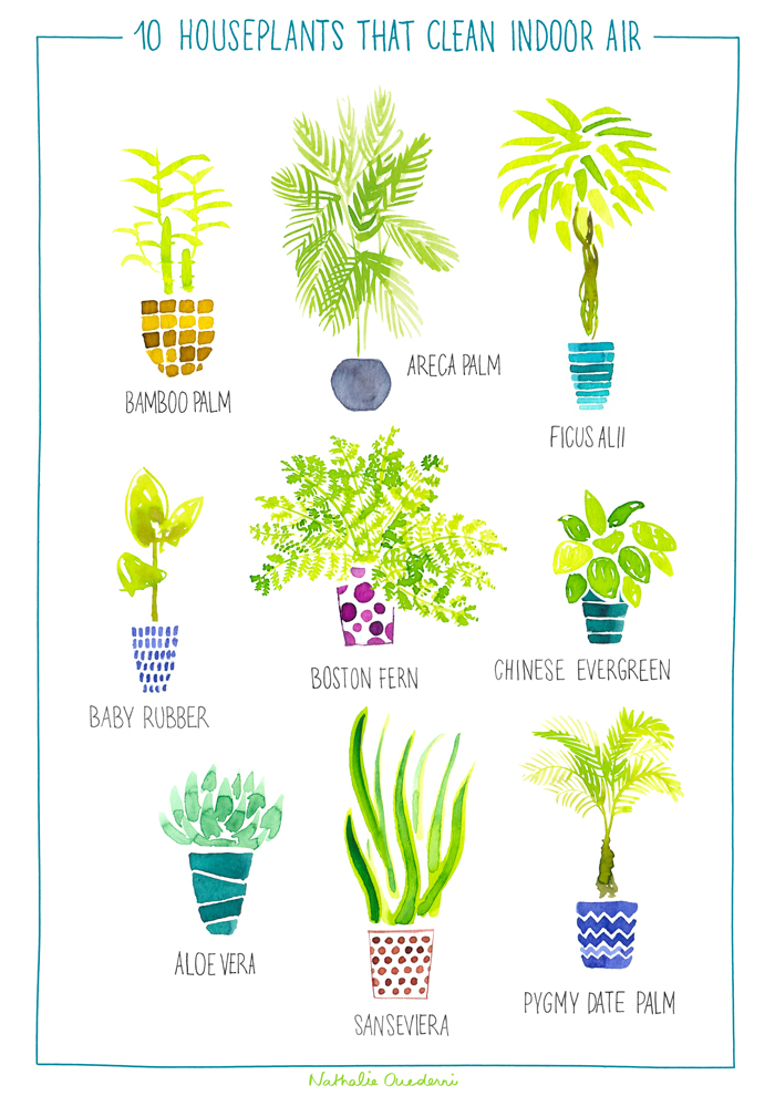 Houseplants-illu