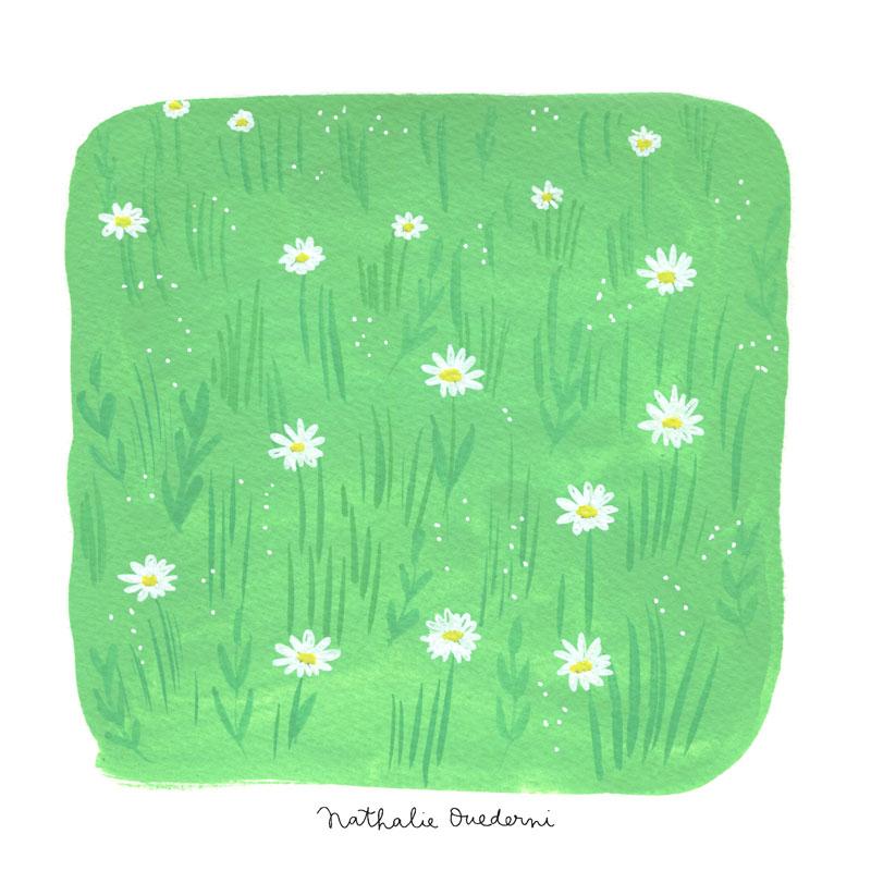 08-daisies.jpg