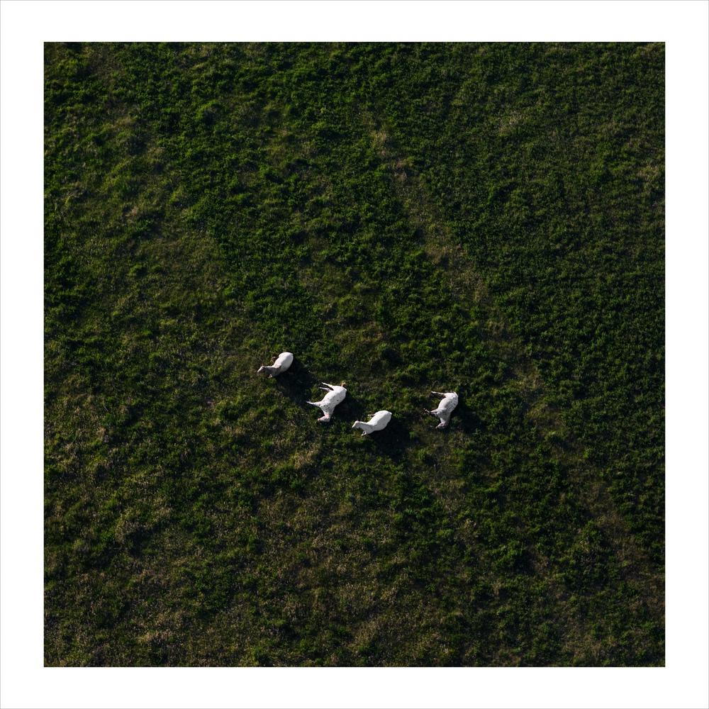Appaloosas(Scott-horses)3652-30x30-print.jpg
