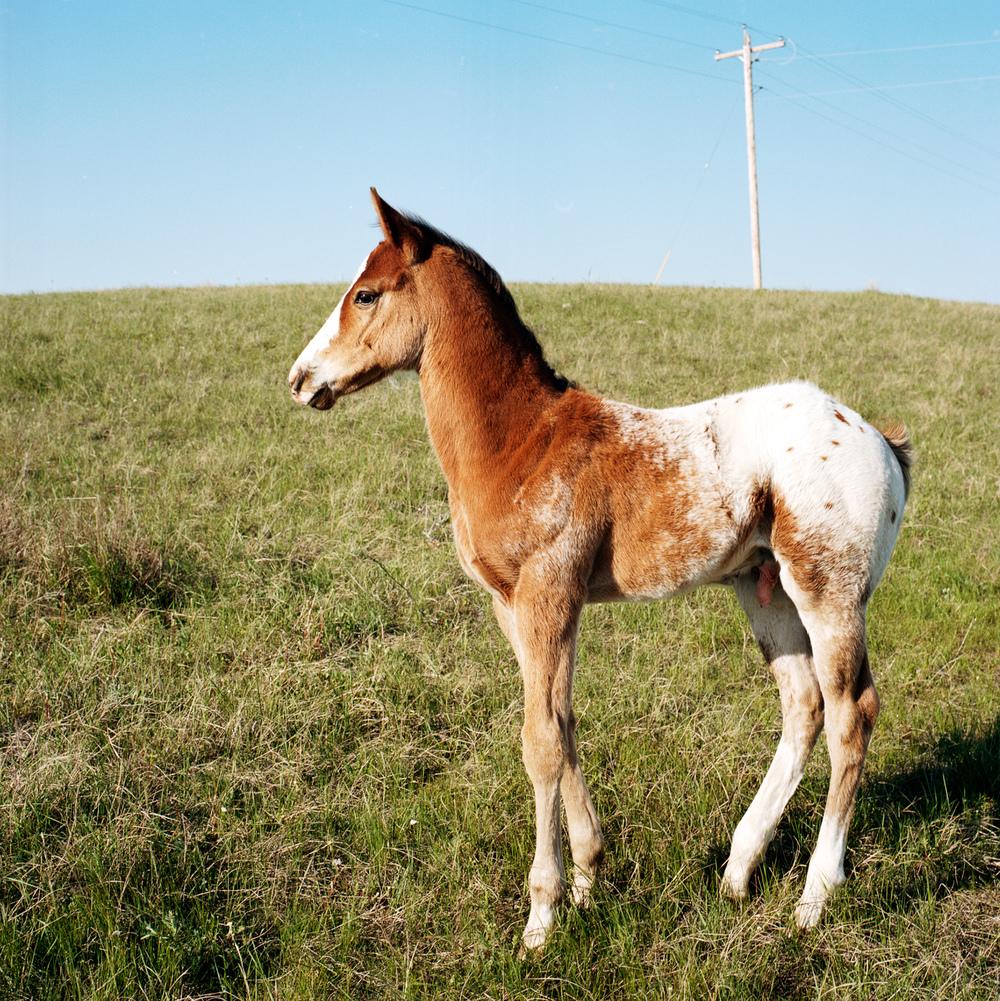 foal8x8.jpg