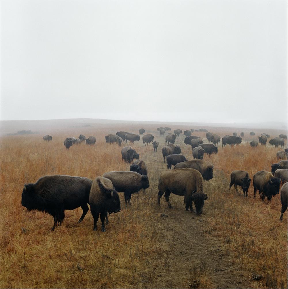 Terry-bison-print.jpg