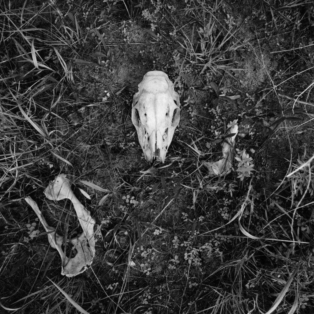 deer bones 15x15.jpg