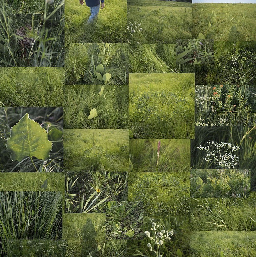 cardSummer 2017 Terry Evans-Two ancient prairies.jpg