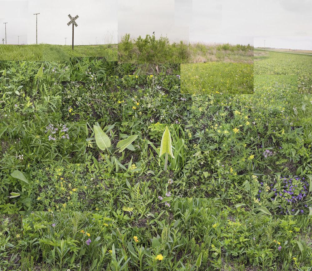 Central Illinois Prairie, May 2018.jpg
