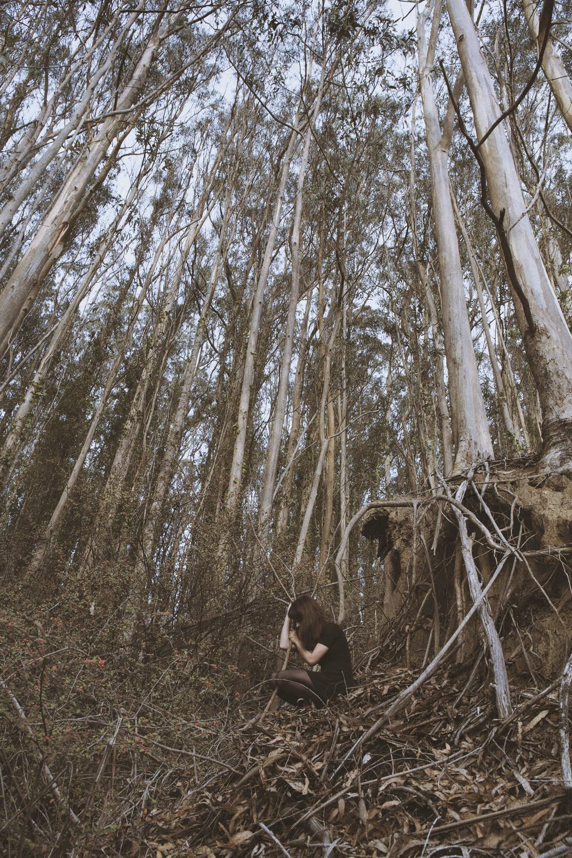 FR_manav_7_forest.jpg