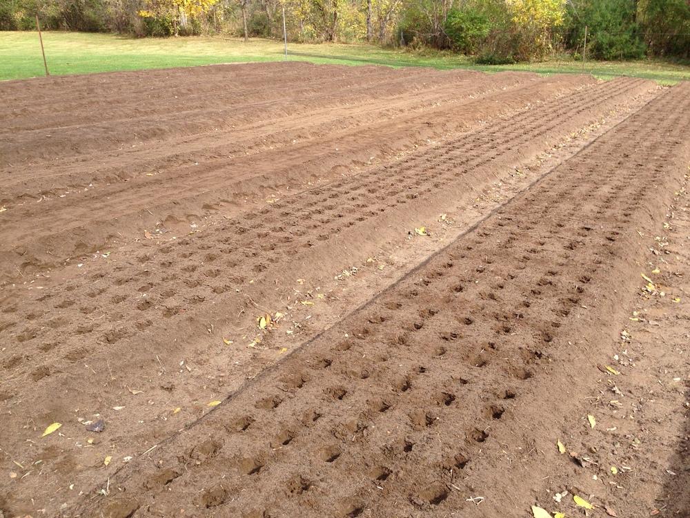 Planting pattern
