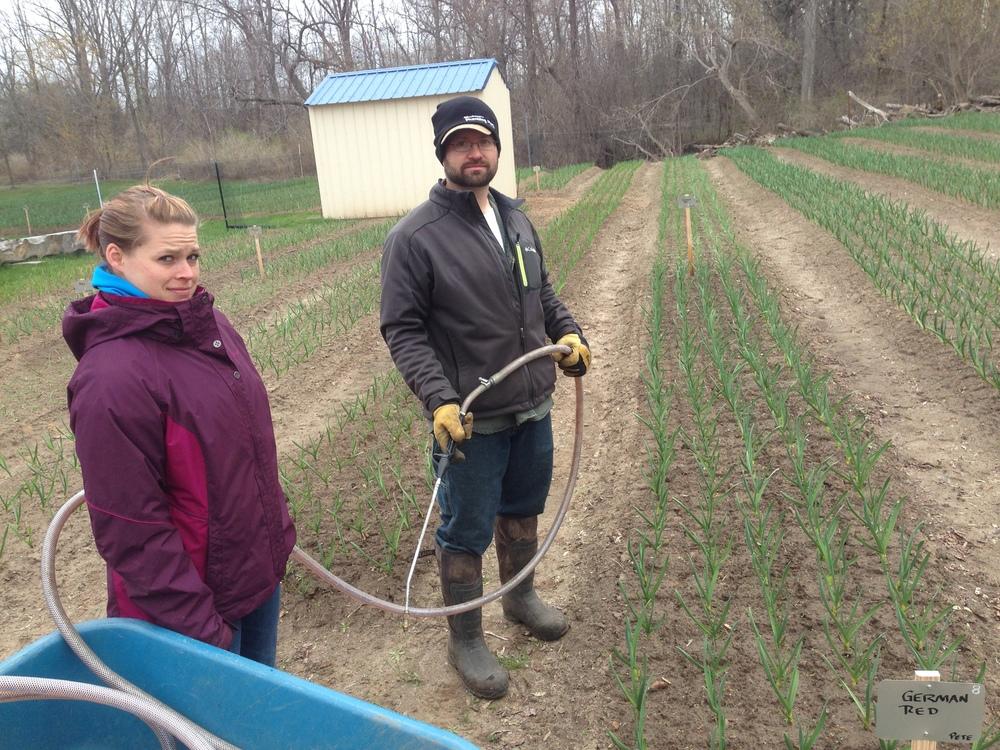 Applying an organic foliar feeding
