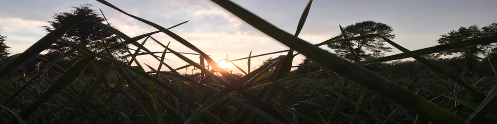 banner garlic field.jpg