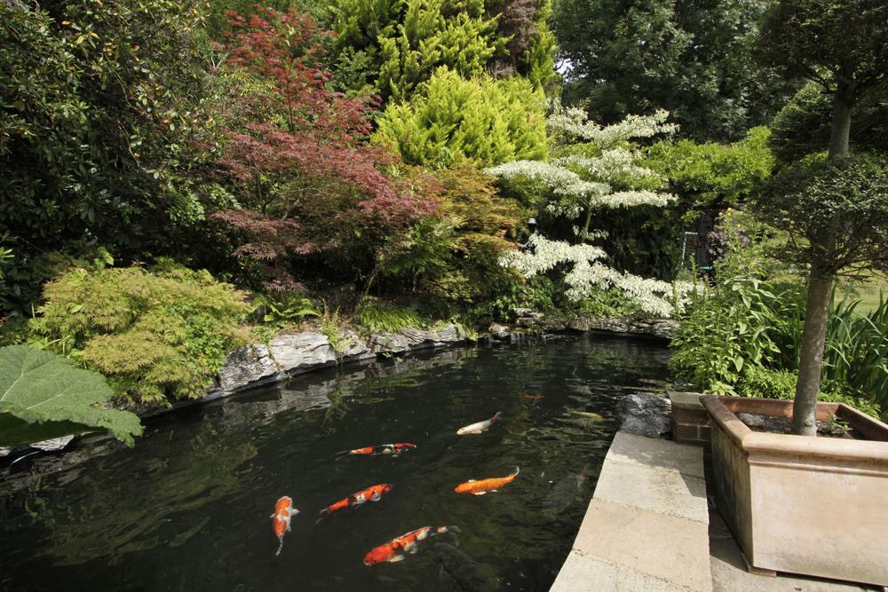 Thornley - Fish Pond.jpg