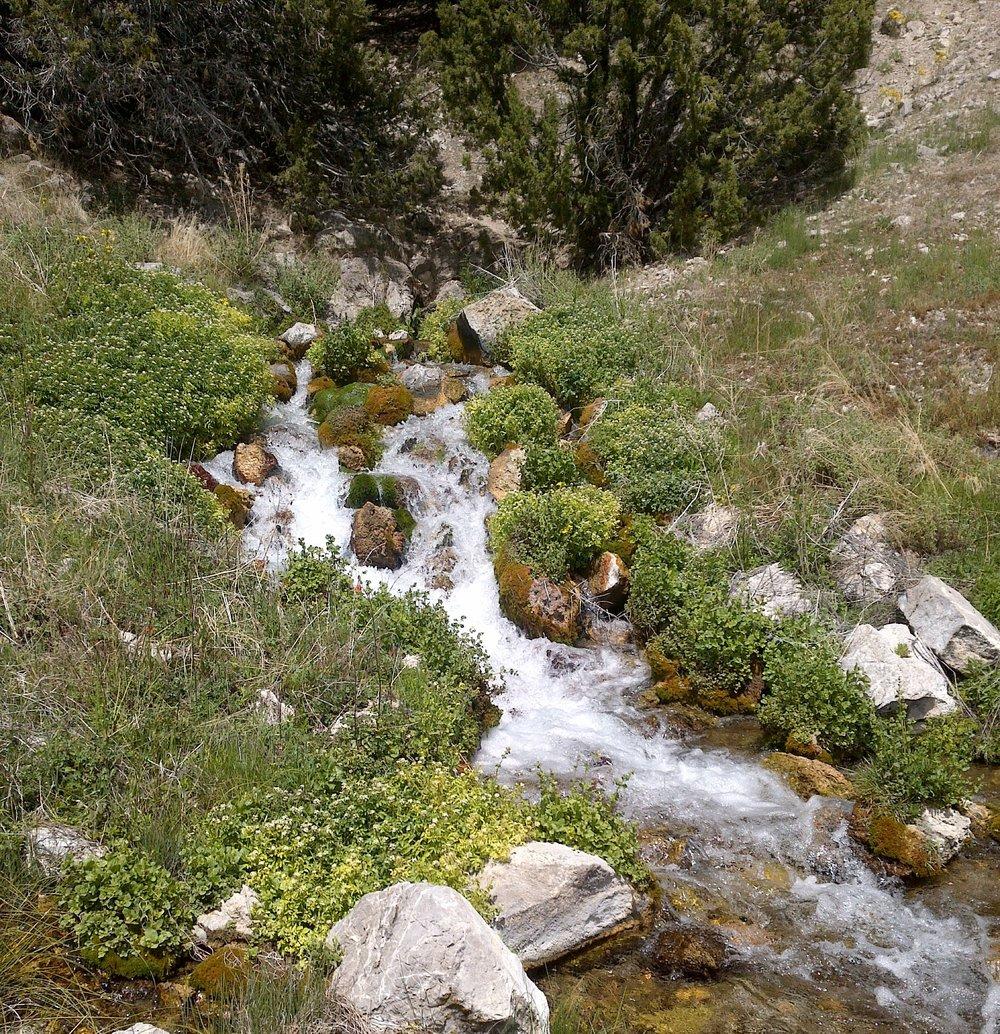 Nevada Spring.jpg