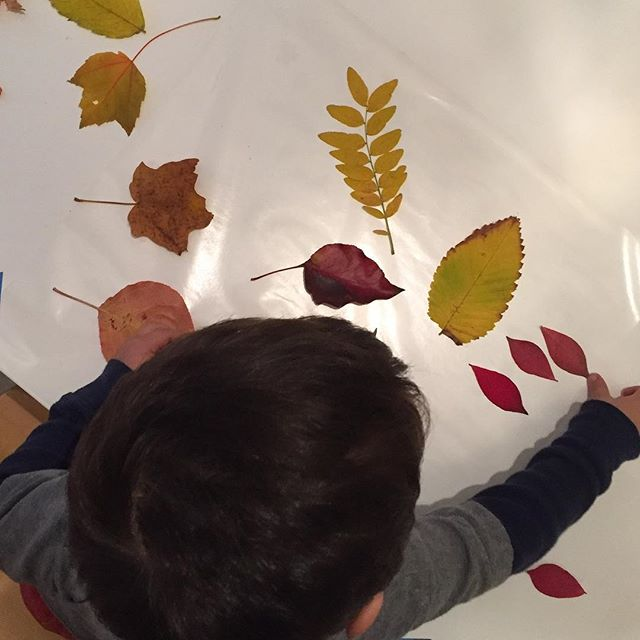 My all time favorite fall art activity is sticking leaves onto contact paper. Any aged child can participate and the results are stunning (especially hung in a sunny window)! 🍁🍂🍁