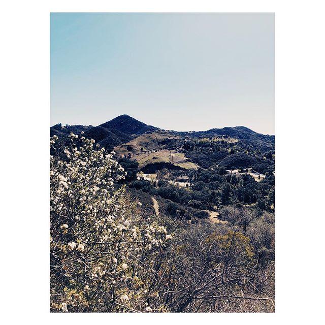 The hidden beauty of #Malibu . . . . . . . . . . . #losangeles #losangelestimes #malibulife #losangelesphotographer #losangelesweddingphotographer #california #gohiking