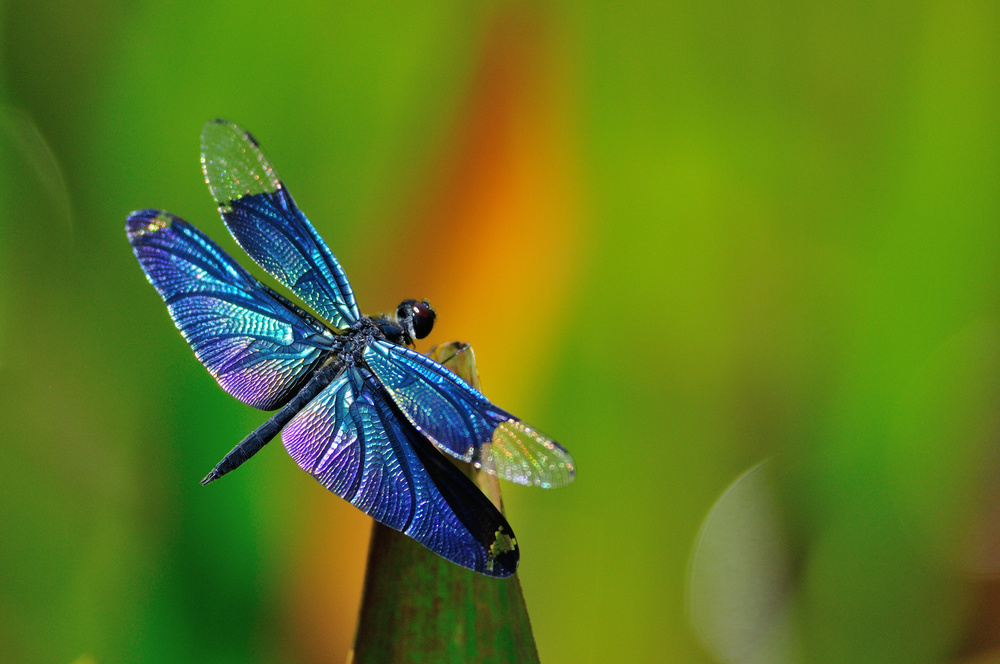 Dragonfly Nature Programs Llc