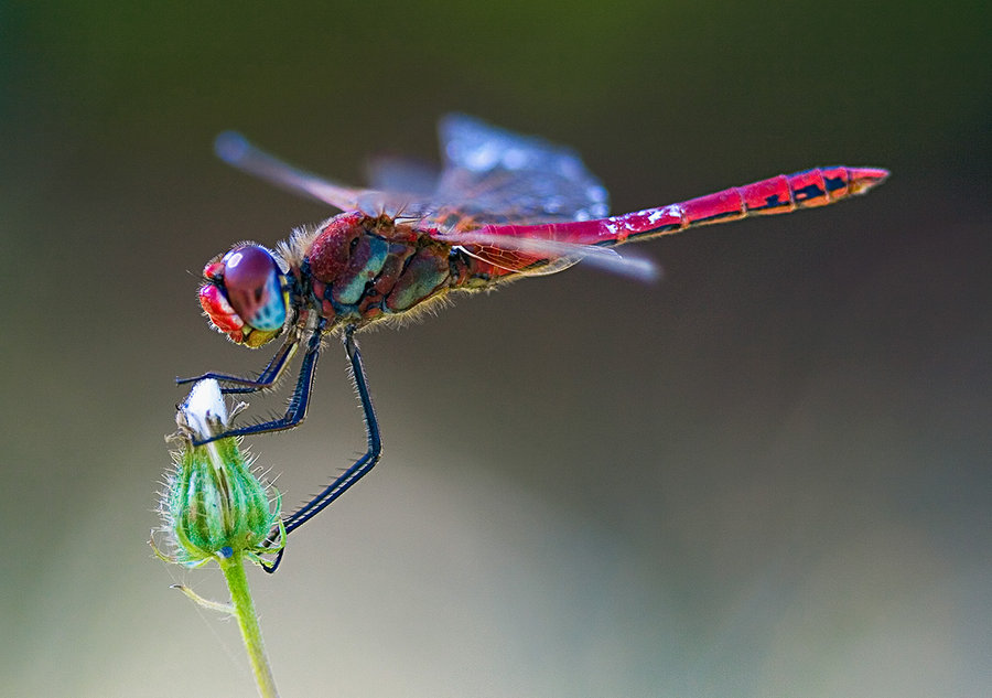 The idea for flexible blades came to the researchers after noting that most insects have flexible wings, which prior research has suggested provides creatures such as the dragonfly more power without expending more energy, by contrast with inflexible wings.