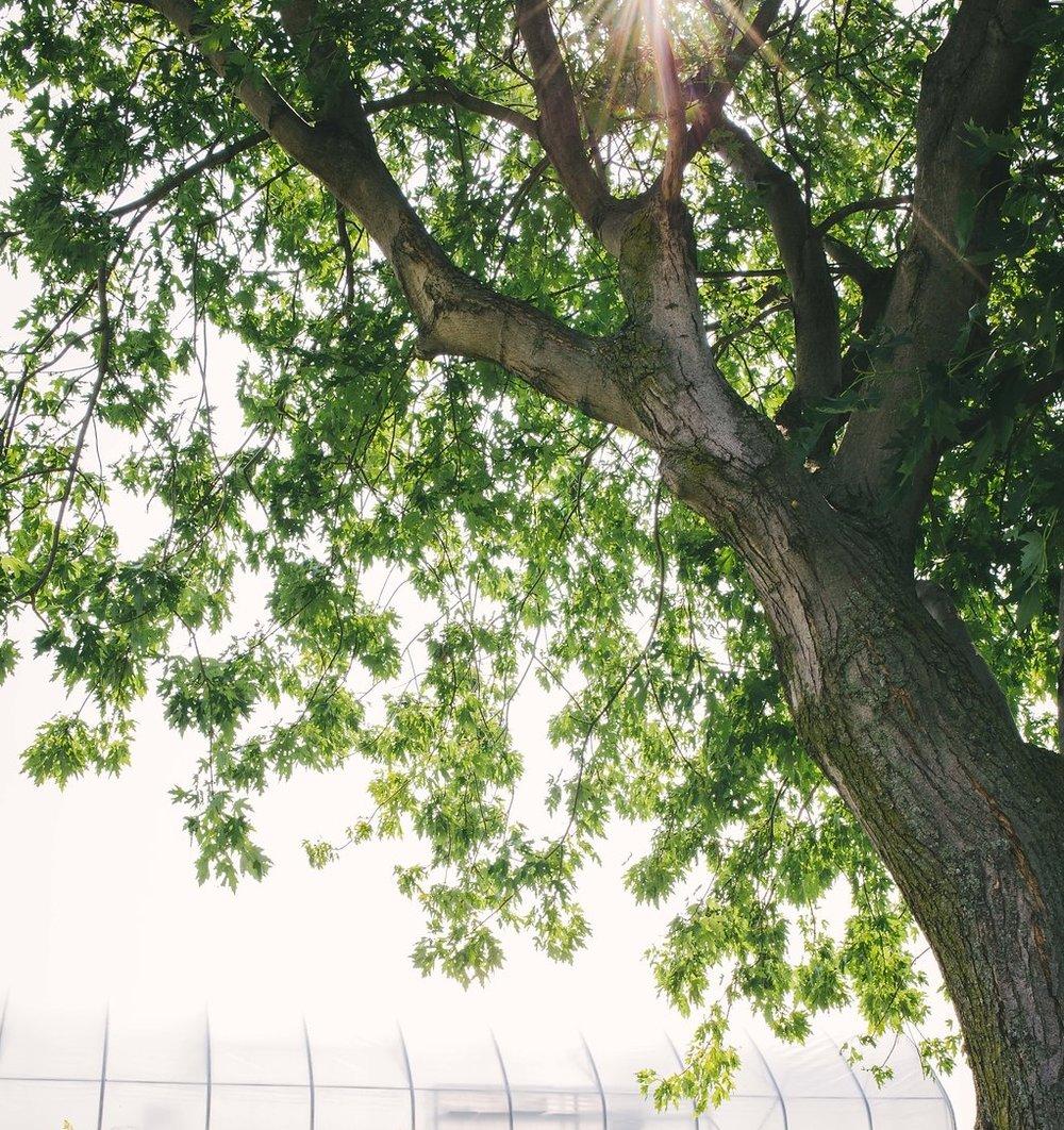 LadyGaia-17.jpg