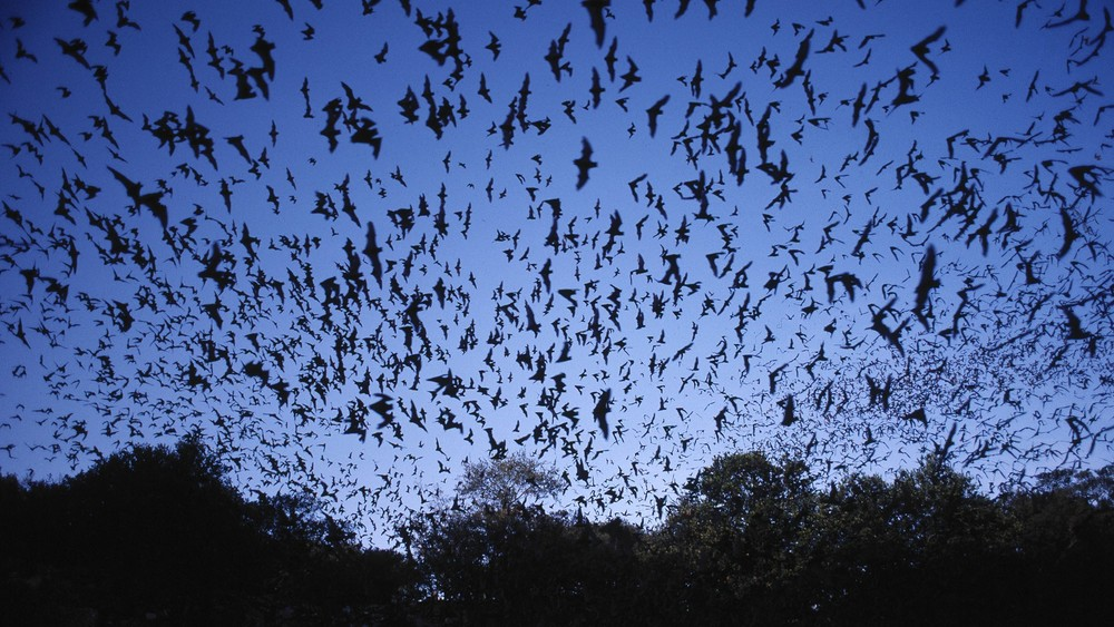 Brazilian free-tailed bats leaving Carlsbad Cavern in search of food, the closest Taco Bell and your girlfriend's neck.