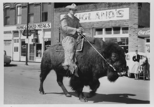 Bison riding, once an Olympic sport, has largely faded from public view. This photo of Dick Standoff, was taken in 1935, shortly before Mr. Standoff was thrown from the bison and mauled by a pet grizzly bear that was following him in the 'Celebrate Nature' parade.