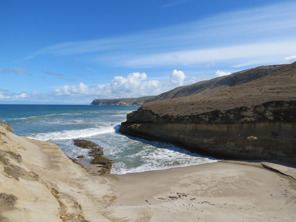 The secluded beach at the mouth of Lobo Canyon, site of the infamous Cow Tail incident. Did The Bearded Man give a piece of his Cow Tail to an Olive-sided Flycatcher or was it stolen by a Western Gull? The proper authorities have been notified and several gulls detained.