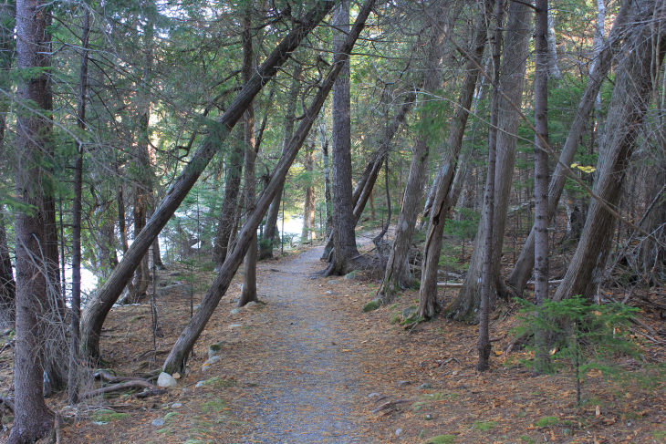ACADIA HAS HUNDREDS OF MILES OF TRAILS. SOME MORE DIFFICULT THAN OTHERS, BUT ALL MAINTAINED BEAUTIFULLY.