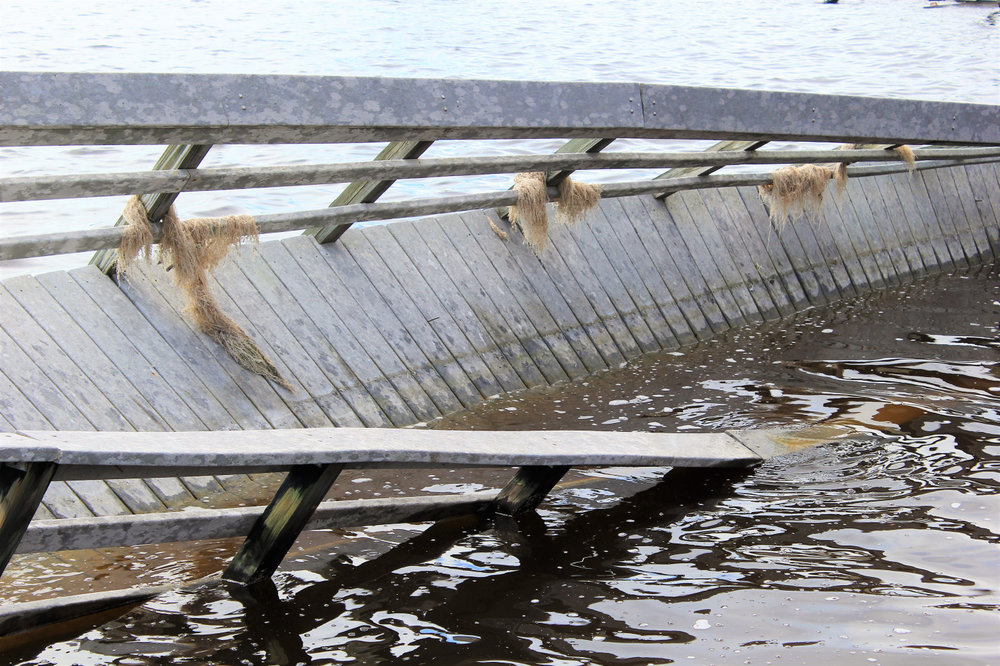 A SECTION OF BOARDWALK TWISTED INTO THE DARK BROWN WATERS.