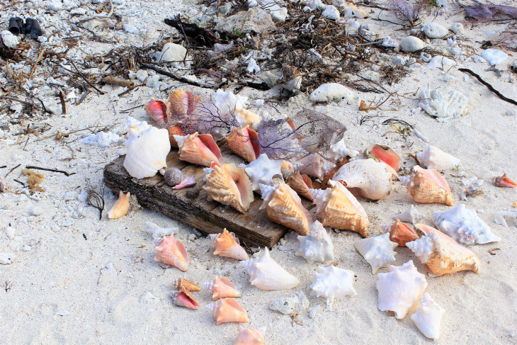 SOMEONE TOOK THE TIME TO GATHER THESE SHELLS AND PLACE THEM ON A PIECE OF DRIFTWOOD.
