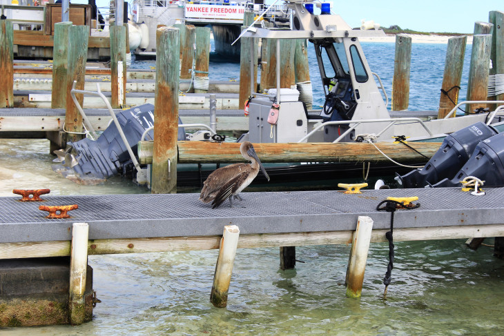 THIS PELICAN HOLDS THE WORLD RECORD FOR STANDING ON ONE FOOT. TWO DAYS, EIGHTEEN HOURS AND FIFTY-SIX MINUTES. RECENTLY BEAT THE PREVIOUS RECORD HELD BY PERRY 'PEG-LEG' JOHNSON OF ST. AUGUSTINE.