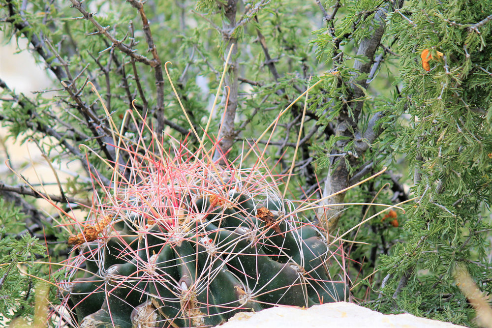 Voted best looking cactus in the park three years running, Rhonda has taken on a certain form of vanity. Insists on being referred to as temperamental instead of prickly.