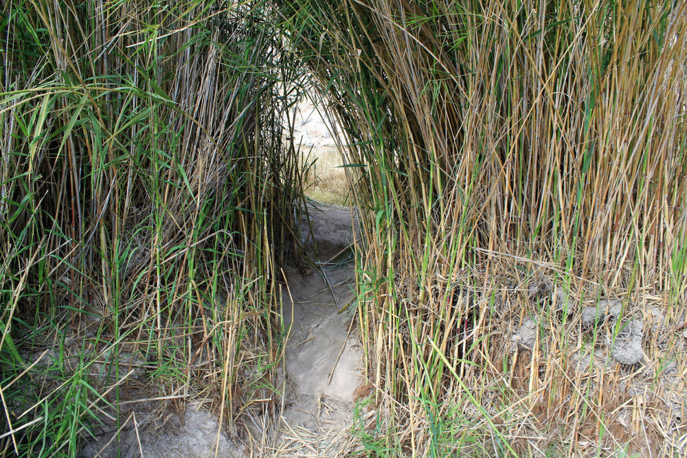 A two foot high tunnel through bamboo grass, made by small animals to reach the river. Or the mountain lion that followed me the entire time I was in Big Bend.