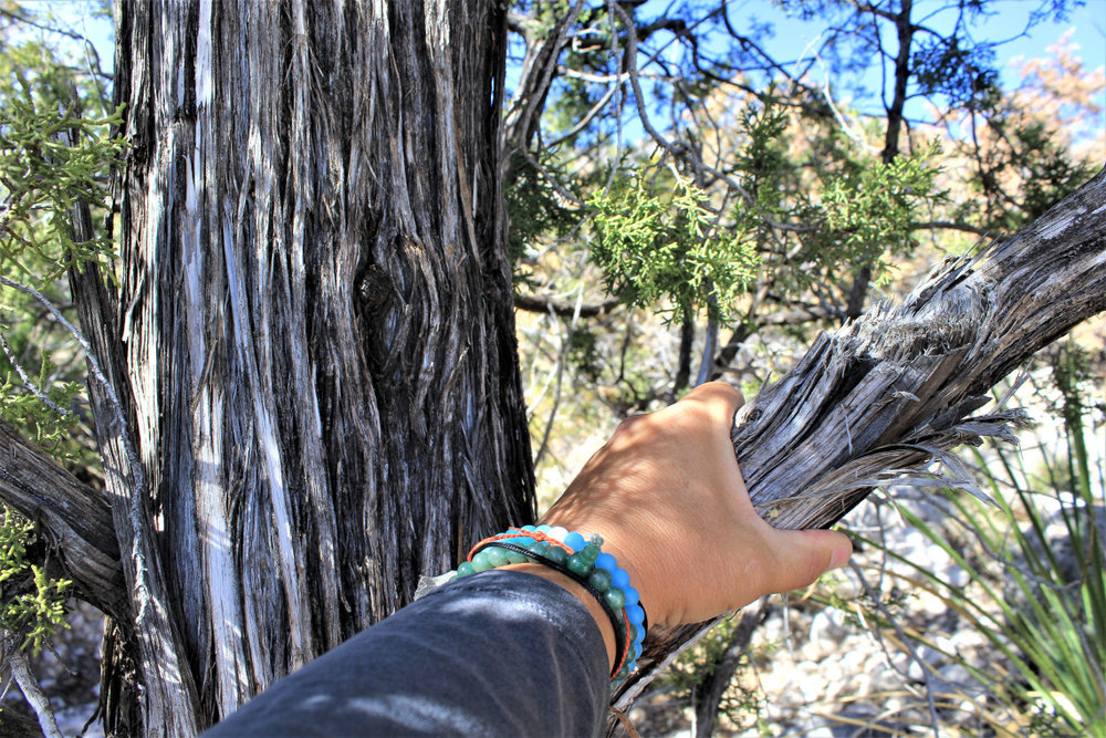 For some reason I like to put my hand on trees. I'm thinking about seeing someone for it
