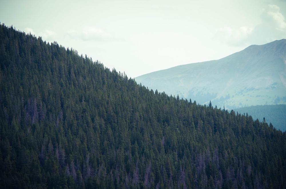 treesquandary.jpg