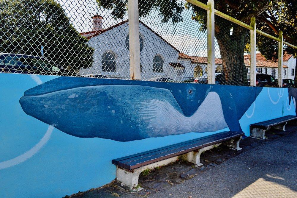 Sloat Murals Ballena azul2_Fotor.jpg