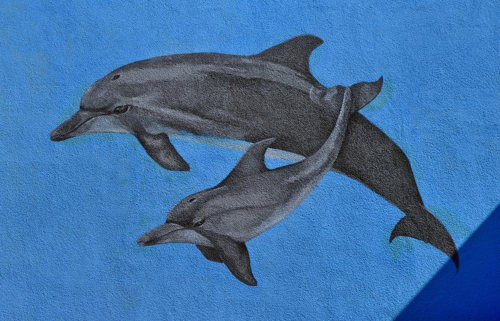Sloat Murals Delfines_Fotor.jpg