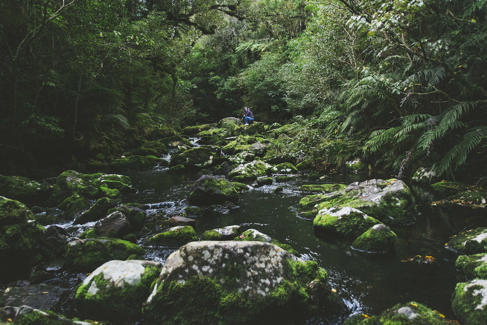 mcleans river