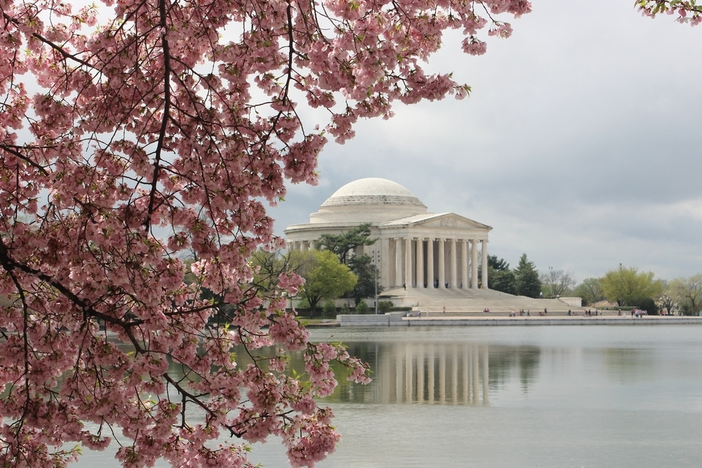 Washington-Dc-Cherry-Blossom.jpg