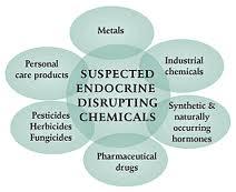 endocrine-disruptors.jpg